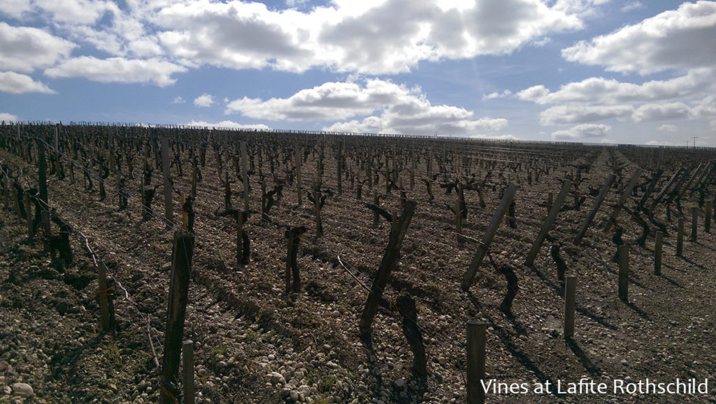 Lafite Rothschild Vines